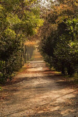 beautiful colors of autumn in Ataturk arboretum