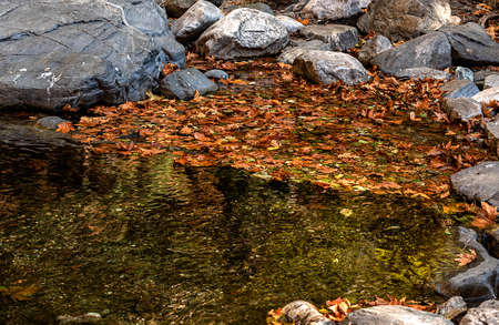 dried leaves fall into water in autumn Stockfoto