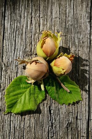 Drie hazelnoten op houten achtergrond vers geplukt van een boom