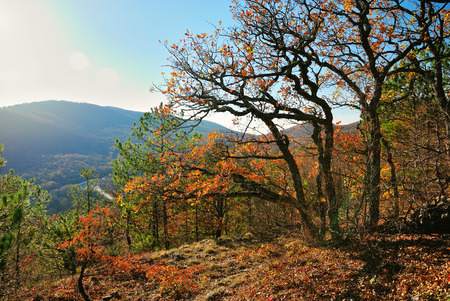 Golden autumn in a wooded area in the mountains on a sunny day Stock Photo