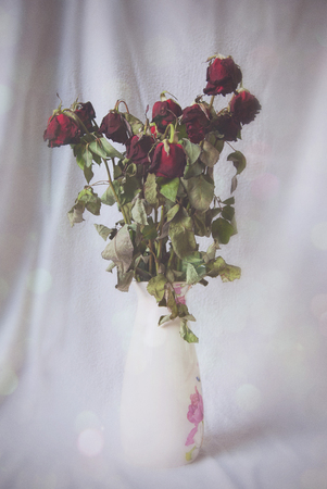 wilting: Wilting red roses in white patterned vase. Stock Photo