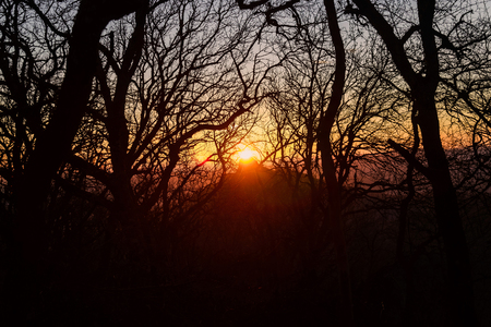 The setting sun in the forest in late autumn, twilight, bare branches of trees 스톡 콘텐츠 - 126187426