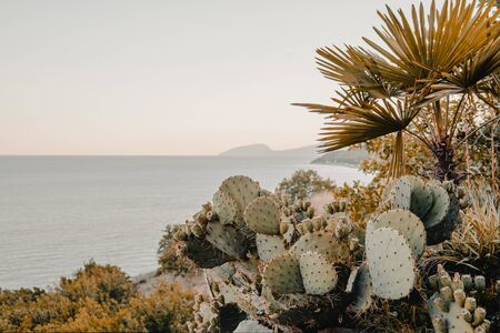 Opuntia cactus on the background of the sea, summer landscape, retro toning