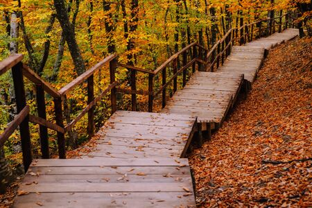 Path in the autumn golden forest, concept vacation, walk, relaxation, day off, unplugged Stockfoto - 134027845