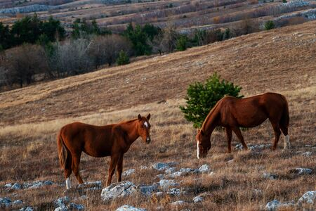 Two red horses: mother and foal graze in the mountains Stockfoto - 134027847