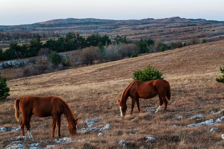 Two red horses: mother and foal graze in the mountains Stockfoto - 134027854