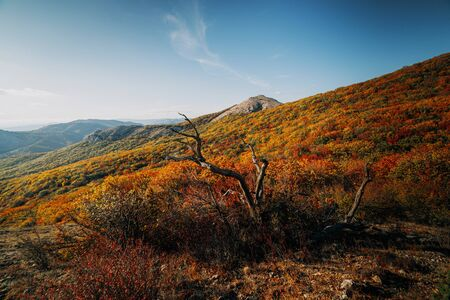 Colorful forest in autumn in the mountains in the afternoon Stockfoto - 134028074