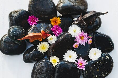 Wet black stones with chrysanthemum buds and small toy dinosaurs, decor for spa, relaxation and massage