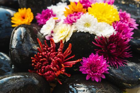 Wet black stones with chrysanthemum buds, decor for spa, relaxation and massage Stockfoto - 134847241