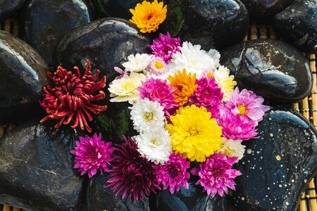 Wet black stones with chrysanthemum buds, decor for spa, relaxation and massage Stockfoto