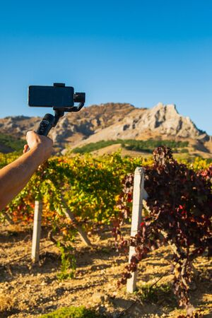 Shooting videos and photos on a mobile phone with a stabilizer in the vineyard in autumn Stockfoto - 134847204