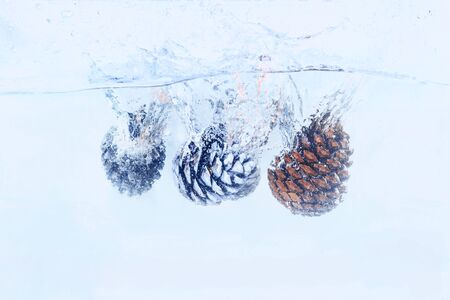 Pine cones fall with splashes into the water on a white background, blue toning, concept new year, christmas, congratulation, postcard Stockfoto