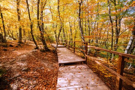 Path in the autumn forest in the afternoon