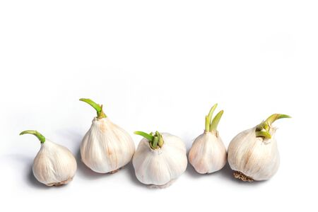 Several heads of garlic on a white background in the kitchen, ingredient for cooking