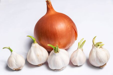 Several heads of garlic and onion on a white background in the kitchen, ingredient for cooking Stockfoto