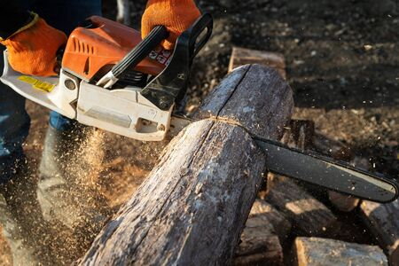 Man is sawing a large log with a chainsaw, close-up, harvesting firewood Stockfoto - 137447998