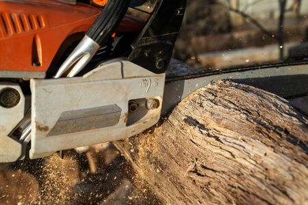 Man is sawing a large log with a chainsaw, close-up, harvesting firewood