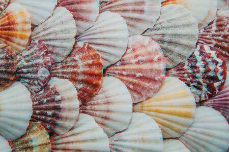 Background of sea shells in glitch effect Stockfoto