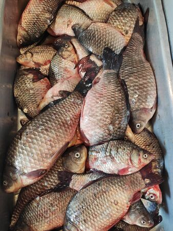 Fresh crucian for sale at the fish market