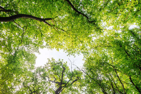 Green tree branches, blue sky, upward view, beautiful natural background