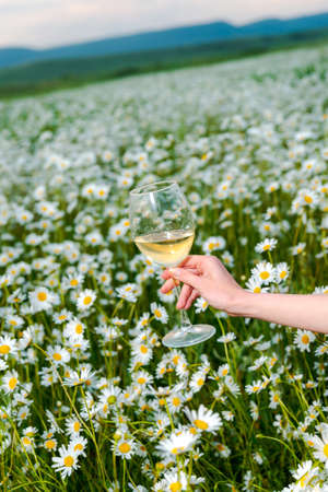 Large glass with white wine in a female hand in a field of daisies