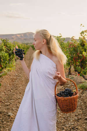 Girl in a toga with a basket of grapes in the vineyard
