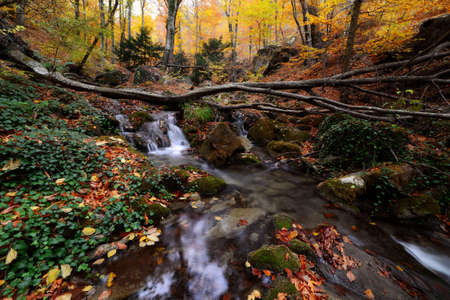 Landscape of a forest in autumn, fall. waterfall on leaves of varied colors, in tones of end of season, on a wall of natural rock.