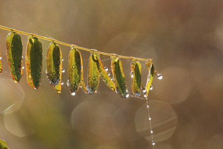 Close up of grass spikes with water drops Banque d'images