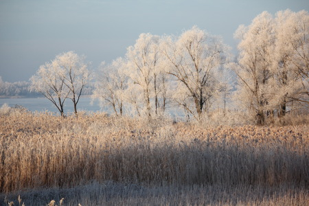 Winter landscape - frosty trees in snowy forest in the sunny morning.