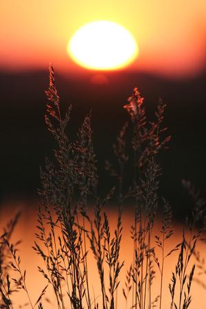 Rush silhouettes at sunset Stock Photo