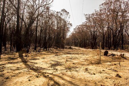 Forest burnt during bushfires in Australia.