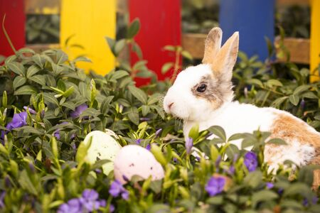 Easter bunny and eggs in the grass