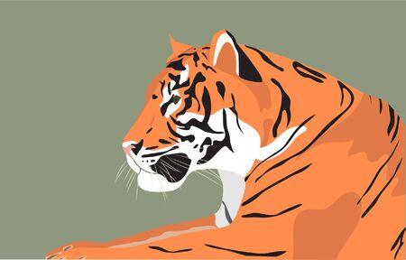Tiger, color vector illustration. Poster, background