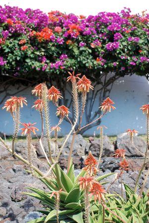 Aloe and other tropical flowers Reklamní fotografie - 846818