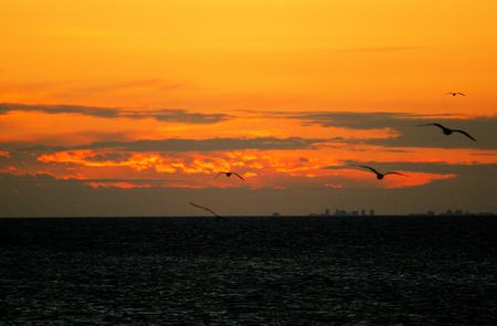 Birds flying over Lake Ontario at sunset