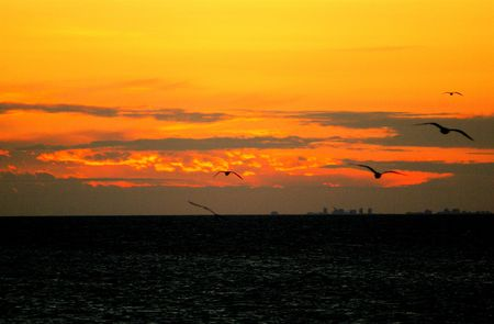 Sunset with herring gulls over Lake Ontario with distant skyline of Toronto