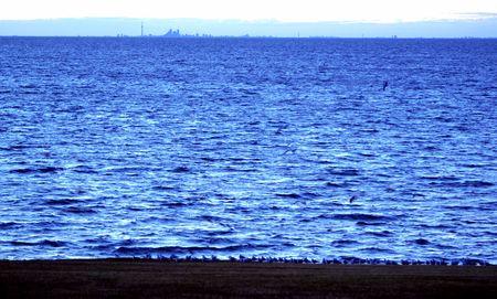 カモメとトロントの距離でビーチに湖オンタリオ
