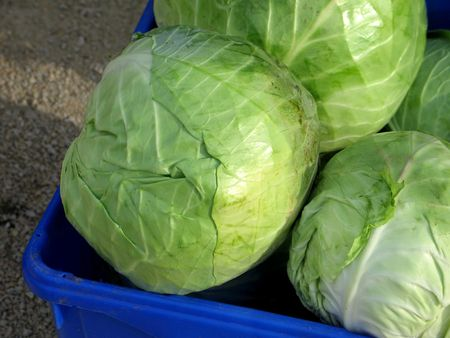 cabbage Stock Photo - 1304025