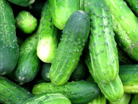 cucumbers: cucumbers Stock Photo