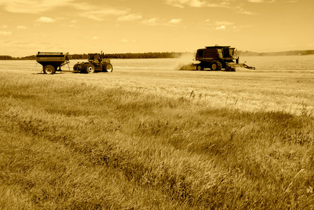 machinery: Harvesting of wheat with three pieces of farm machinery in sepia