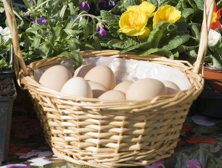 Farm eggs in a basket with spring flowers Stok Fotoğraf