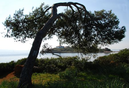 Tree on coastline in Mallorca looking out to island with lighthouse