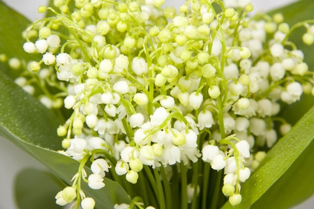 A bouquet of lilies of the valley Stock Photo