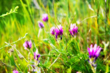 Purple wildflowers on a sunny day
