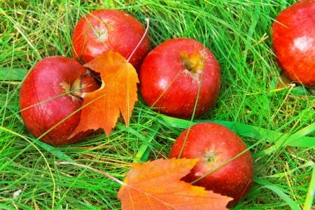 Fallen red apples in green grass