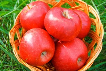 Apples in a basket Standard-Bild