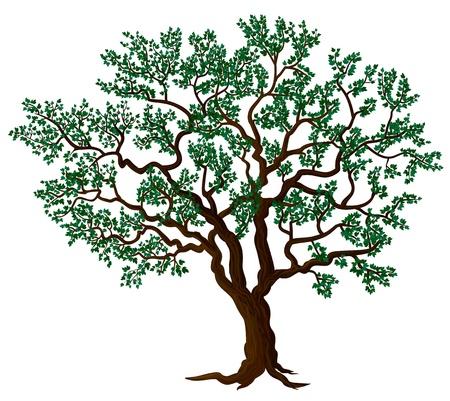 apple tree isolated: Vector tree Illustration