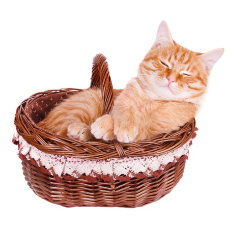 Crafty cat is in the basket Stock Photo - 19080150