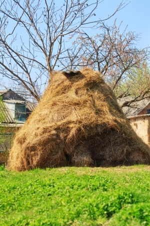 Dry haystack photo