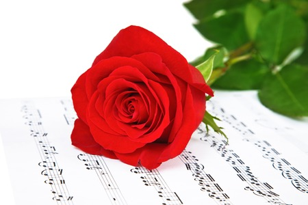 Rose and music sheets with notes photo